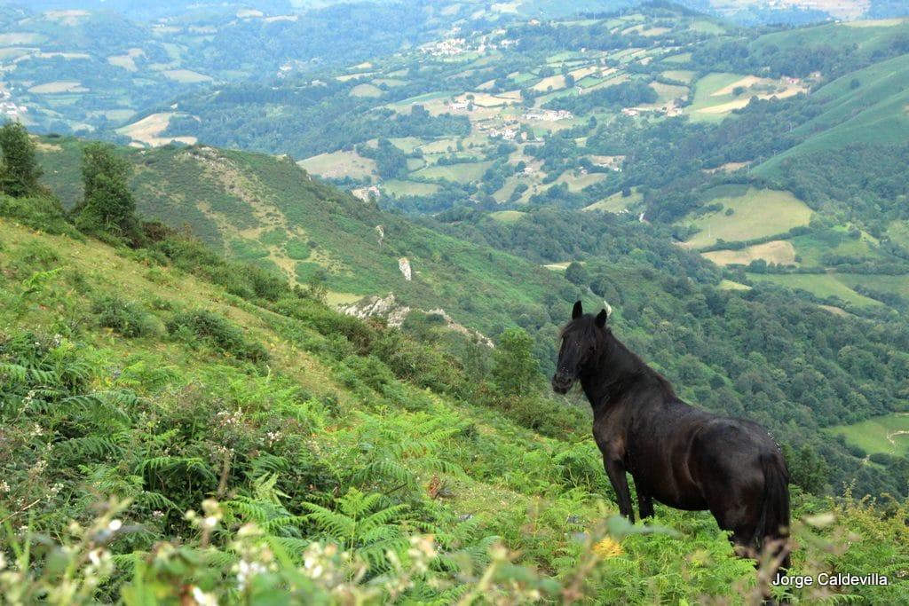 sueve asturcon asturias axtur